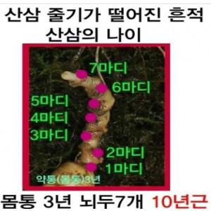 특별판매 (10년근 10뿌리+ 9년근10뿌리)